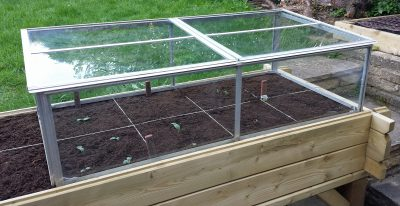 Cold-frame over planter (Image: T. Larkum)