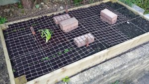 Raised bed with mesh supported on bricks (Image: T. Larkum)