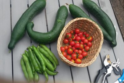 Cucumbers, tomatoes and beans (Image: T. Larkum)
