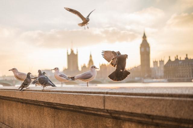 Pigeons (Image: Pexels/Negative Space)